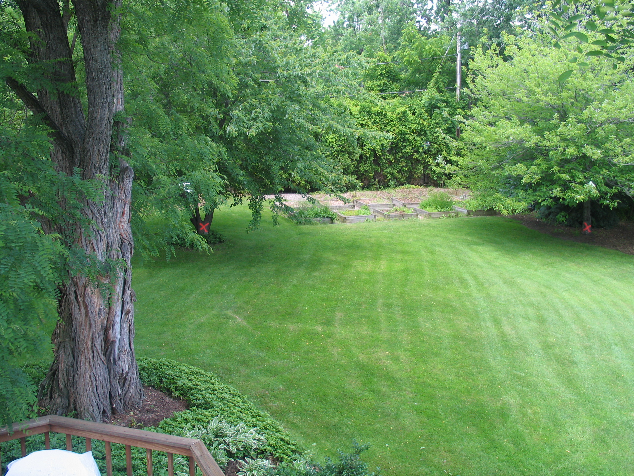 The Backyard Prior To Contruction. The Large Tree In The Foreground And The  Two Trees Marked With Orange Xs Were Among Those To Be Removed.